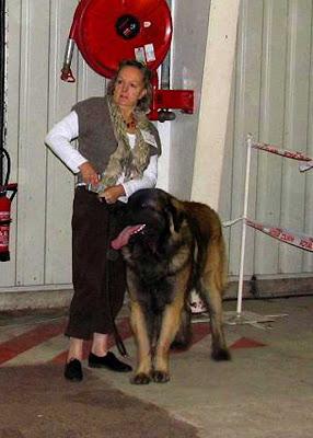 Leonberg Celestin Excellent à Rouen en 2009