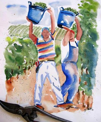 Grape pickers at Regaleali vineyards in Sicily