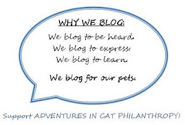 Why We BLog