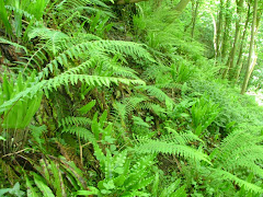 Grove Wood ferns