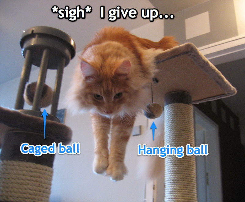 Epic 39 s journal cat vs balls on the cat tree for Epic cat tree