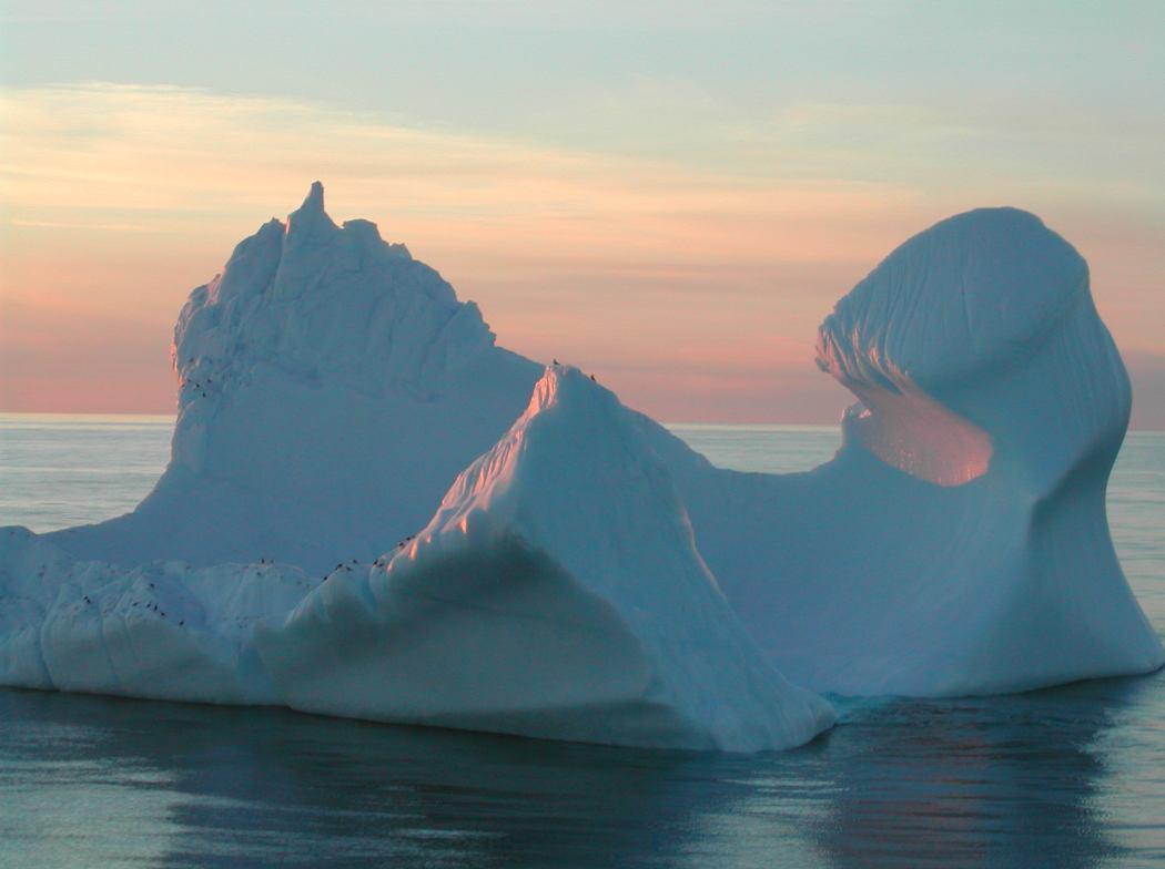 Les créatures ne s'adaptent pas aux changements en Antarctique