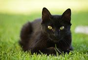 Esta história é sobre um gato que nasceu numa vacaria, que se situava para .