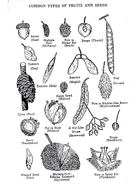 Don t know where this illustration of different seeds