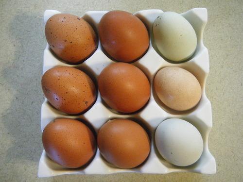 Cuckoo For This Color. Cuckoo+maran+egg+color