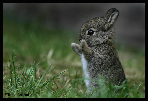 http://3.bp.blogspot.com/_HpUTaQplJy0/SRkfja1Oo8I/AAAAAAAAAAM/s5C0Dblrbjc/S692/cute_bunny.jpg