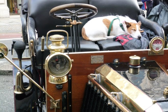 Dog sleeping on the seat of a veteran car