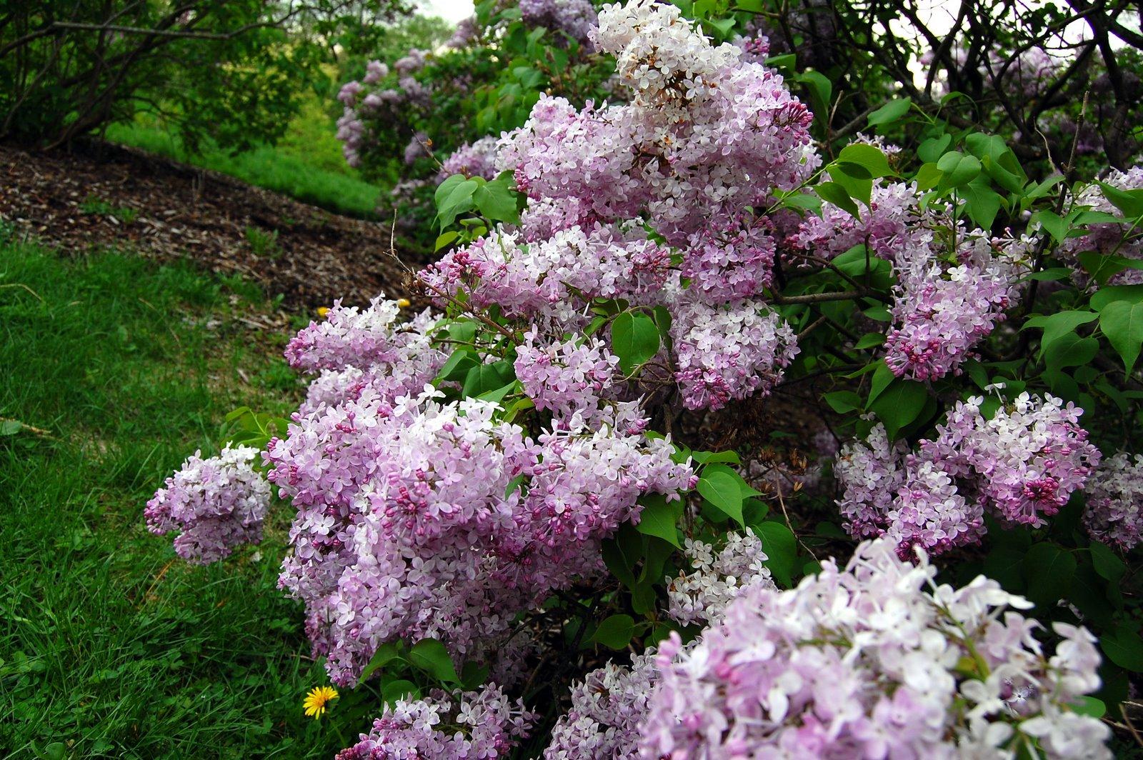 [2009-05-07+Arnold+Arboretum+014.JPG]