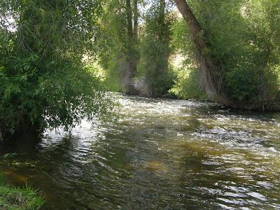 Oak creek angler weber river utah august 2009 for Weber river fishing