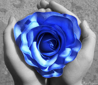 trandafiri albastrii