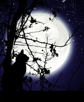 poze pisica neagra