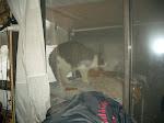 Mitzi viewing the raccoons