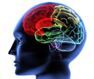hemisferio-trabajo.jpg (460×388)