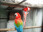 Preethi Farms (Exotic Birds and Dog Breeders)