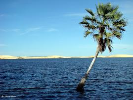 Lagoa do Portinho - Piauí