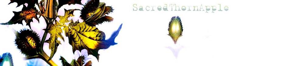 sacred thorn apple