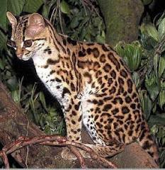 Mayan Fauna Catalog