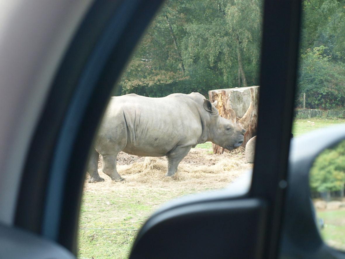 Plans balades zoo et parc de thoiry dans les yvelines 60 for Balade dans les yvelines