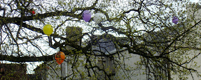 Balloons stuck up trees in Lisburn's Castle Gardens