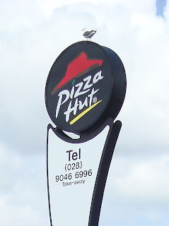 Seagull sitting on the sign above a closed Pizza Hut branch at Connswater, Belfast