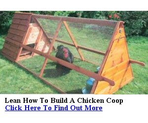 Build Your Own Hen House Free Plans