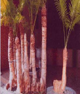 Tanaman Purba
