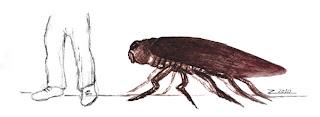 Insecto. Metamorfosis. Franz Kafka