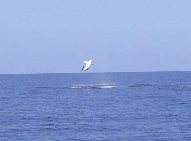 Pacific Corinthian Yacht Club. Open Mako Shark Tournamen. July 15-17, 2011