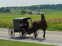 Amish Vegetables