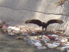 Desechos en el Guaire
