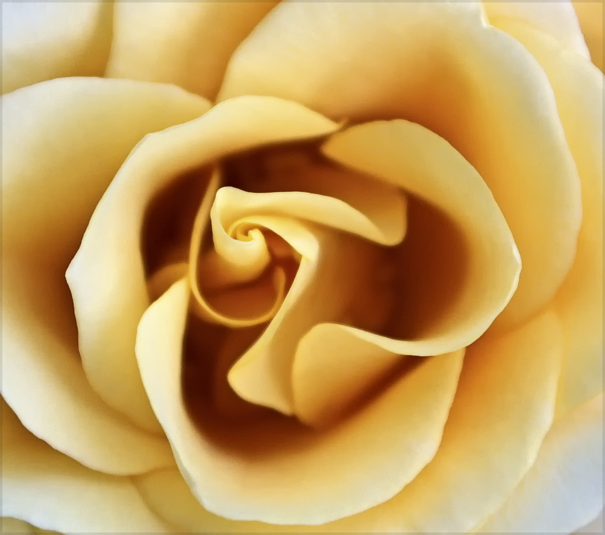 Sensual+Rose.jpg