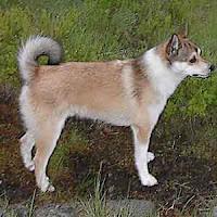razas raras de perros