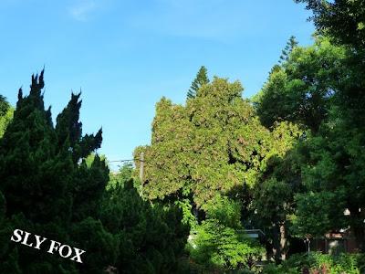 台南神學院蘇萬利花園