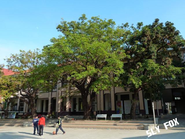台南立人國小茄苳樹