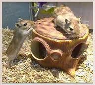 Hamsterii în cuşcă