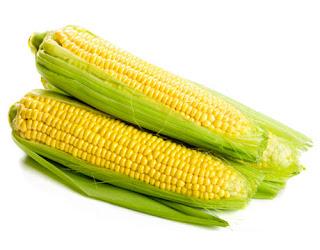 milho, milhos, plantacao de milho, nutricional, infos