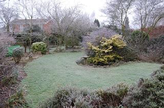 freezing back garden