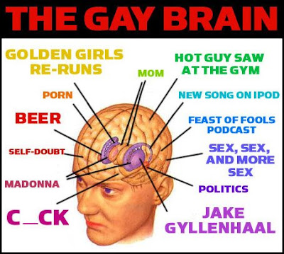 The+Gay+Brain.jpg