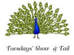 Link to Angela's Tuesday's Show & Tails