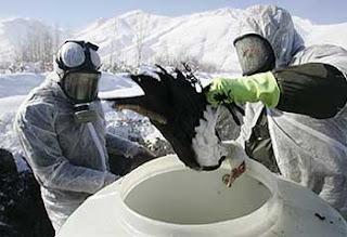 El virus de la gripe aviar ha mutado y ya puede provocar una pandemia