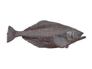 Halibut o fletán, buena fuente de vitamina D son Pescados de nueva GENERACION