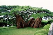 * Organic tree