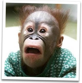 scared-monkey.jpg