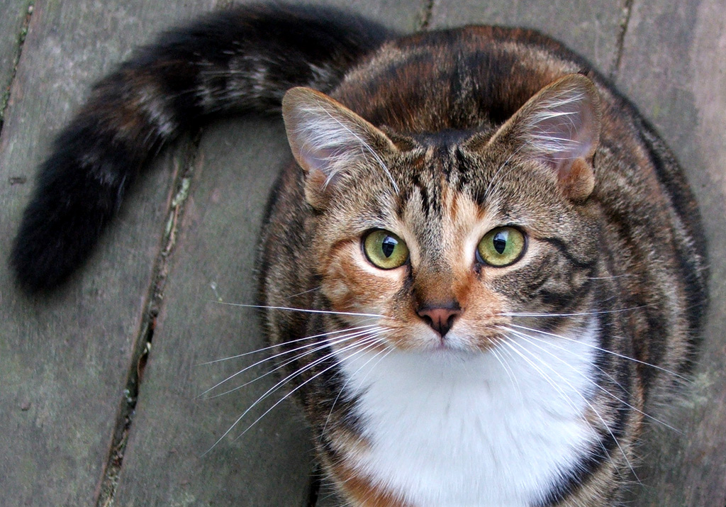 Cats lover cat types by fur color - Images of tortoiseshell cats ...