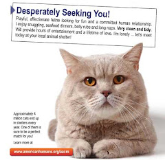 Adopt A CAT!!! Help Them!!! Petfinder.my