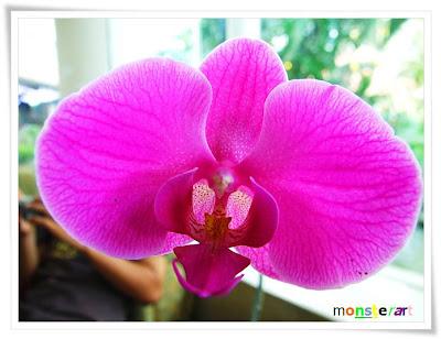 bunga bunga ni aku snap kat jokja tapi di merata tempat lah....bunga ...
