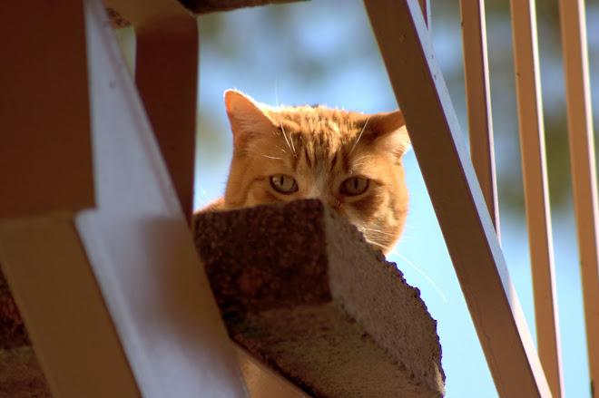 Cat @ Las Vegas Condo