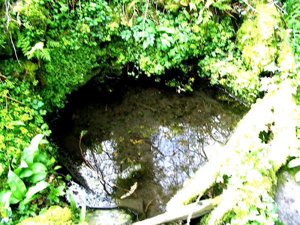 St Materiana's Well