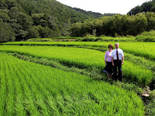 Pretty Rice Field