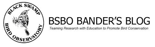BSBO Bird Bander's Blog